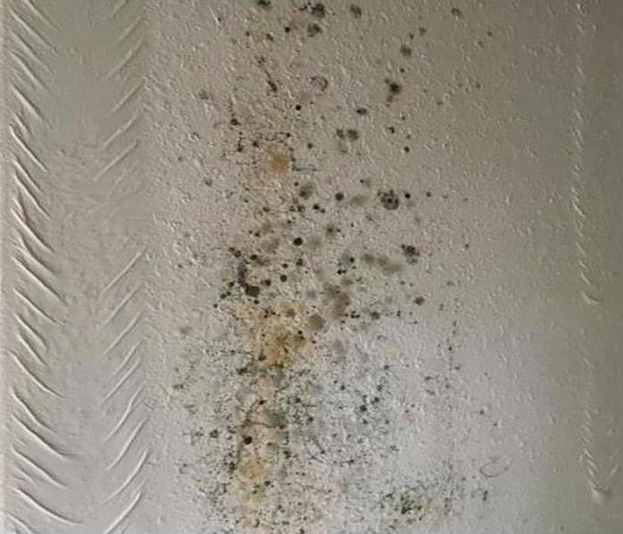 Mold Damage In Lone Mountain Before