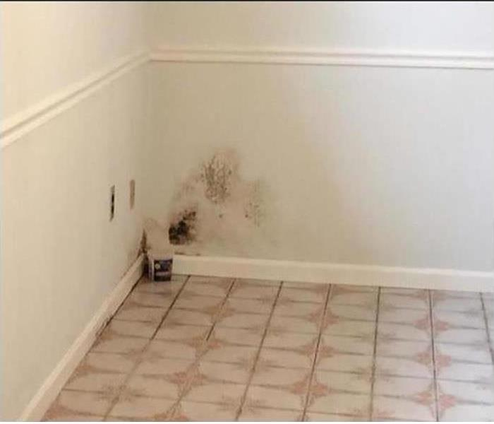 Mold Damage – Lone Mountain Home Before