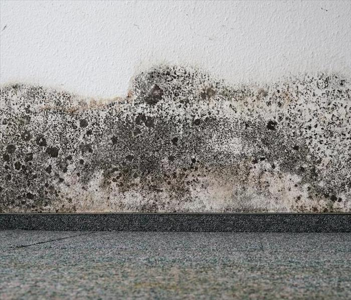 Mold Remediation How to Solve Potential Mold Damage Problems in Phoenix