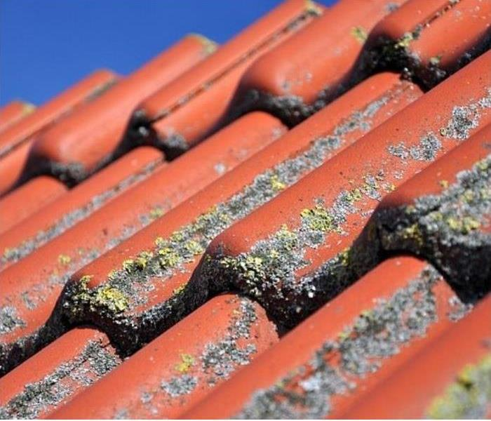 Damaged roof allows moisture in attic