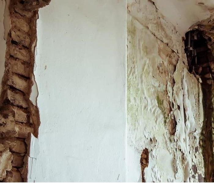 Severe mold damage