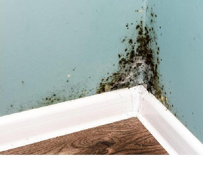 Mold Remediation Tips For Controlling Mold Damage in Your Paradise Valley Home