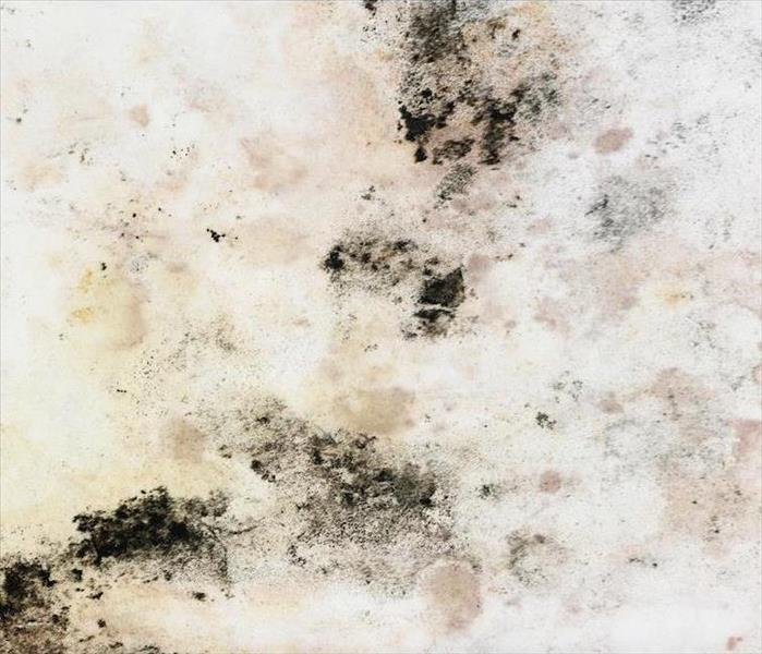 Mold Remediation Mold Does Grow in Phoenix if Conditions are Right