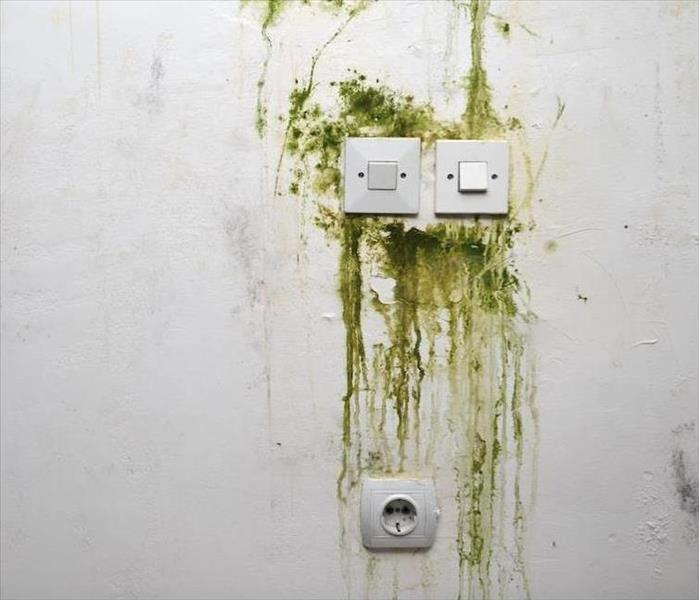 Mold Remediation Do You Struggle With Mold Damage in Your Paradise Valley Home?
