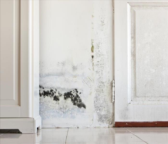 Mold Remediation Identifying Potential Sources of Mold Damage in Phoenix Homes