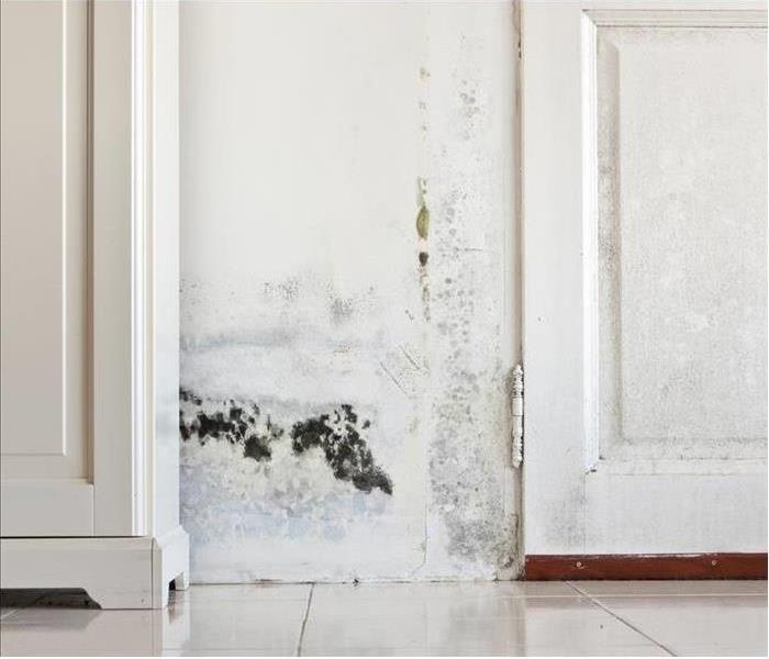 Why SERVPRO Identifying Potential Sources of Mold Damage in Phoenix Homes