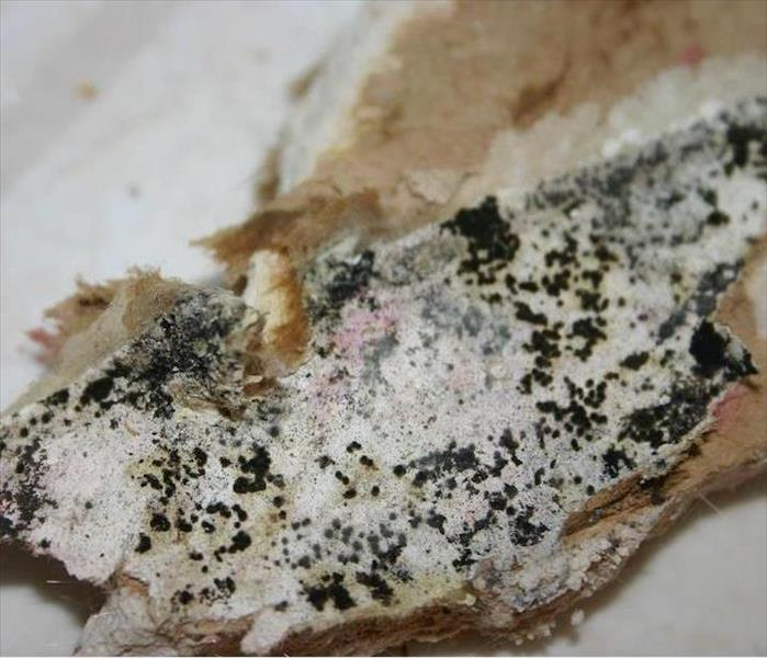 Mold Remediation Mold Damage Can Be Detrimental to Fabrics in Paradise Valley Homes