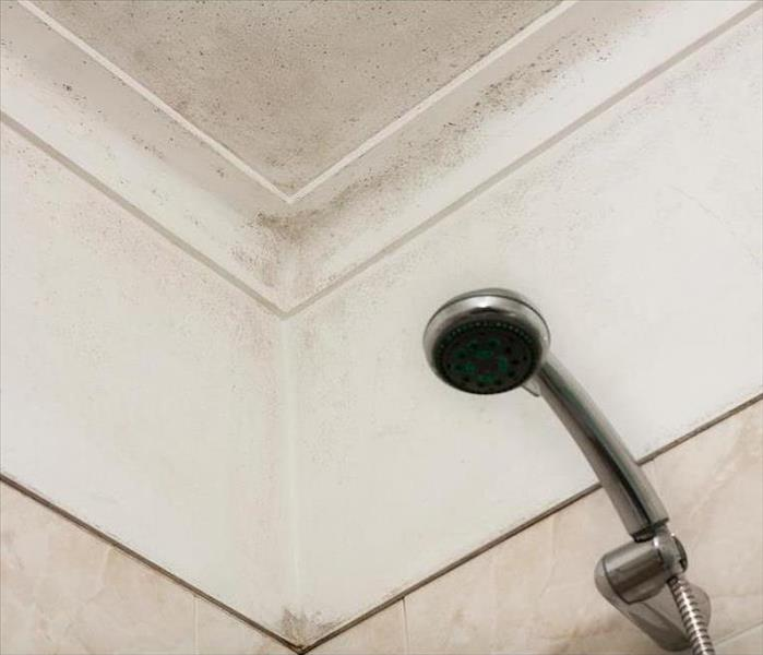 Mold Remediation Mold Damage in Shower of Your Phoenix Home