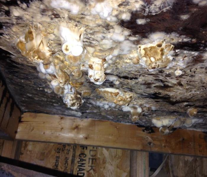 Mold Remediation Unbelievable mold growth?  Believe it!