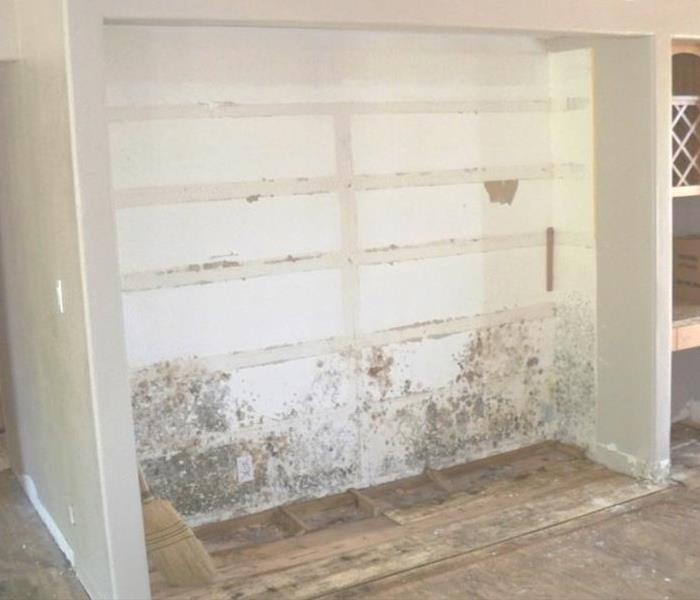 Mold Remediation Unaddressed Water leak